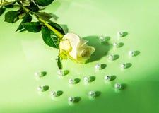 Fond abstrait des fleurs Photographie stock