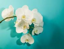 Fond abstrait des fleurs Photos stock