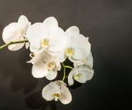Fond abstrait des fleurs Images stock