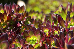 Fond abstrait des fleurs avec le bokeh Images stock