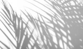Fond abstrait des ombres en feuille de palmier sur un mur blanc Photos libres de droits