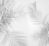 Fond abstrait des ombres en feuille de palmier sur un mur blanc Images libres de droits