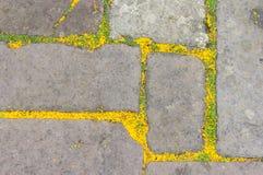Fond abstrait des pétales et des feuilles sur le vieux chemin en pierre Images stock