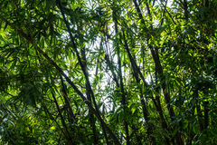 Fond abstrait du bambou Images stock