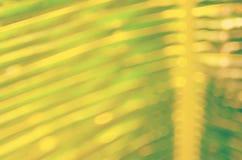 Fond abstrait en feuille de palmier tropical de tache floue Photographie stock libre de droits