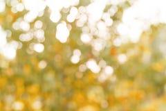 Fond abstrait ensoleillé de nature d'automne Photo libre de droits