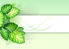 Fond abstrait - feuilles de vert Photos libres de droits