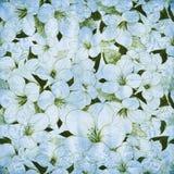 Fond abstrait floral bleu Images stock