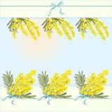 Fond abstrait floral de calibre de ressort avec la fleur d'acacia de mimosa et endroit pour le texte Photos libres de droits