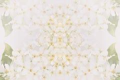 Fond abstrait floral Le modèle des fleurs de cerise d'oiseau Images stock