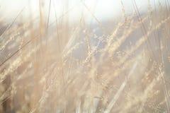 Fond abstrait : herbe d'automne de nature Images libres de droits