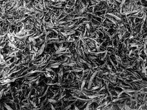 Fond abstrait par des cendres de l'herbe et du congé image libre de droits