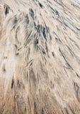 Fond abstrait sous forme de taches noires sur le sable Photos stock