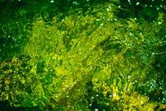 Fond abstrait trouble vert automnal de l'eau Formé des réflexions ensoleillées des arbres forestiers et du mouvement en rivière Images stock