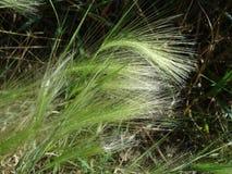 Fond abstrait vert des lames d'herbe Photographie stock libre de droits