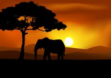 Fond africain de coucher du soleil avec l'éléphant Photos stock