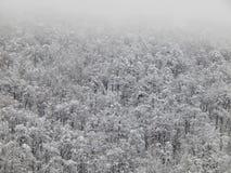 Fond Arbres sur la montagne dans le brouillard Krasnaya Polyana, Sotchi, Russie Janvier 2015 Images libres de droits