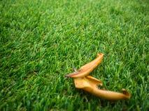 Fond artificiel de texture d'herbe verte Photographie stock libre de droits