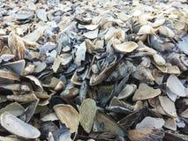 Fond artistique des coquillages sur la plage Photo libre de droits