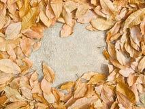 Fond automnal abstrait avec les feuilles sèches Salutation d'automne Image stock