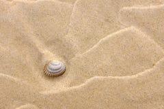Fond avec à sable jaune et une coquille Image stock