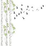 Fond avec des arbres et des oiseaux de bouleau Photos stock