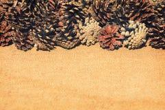 Fond avec des cônes de pin Photographie stock libre de droits