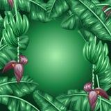 Fond avec des feuilles de banane Image décorative de feuillage, de fleurs et de fruits tropicaux Conception pour faire de la publ Photo libre de droits
