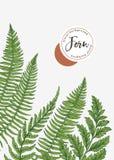 Fond avec des feuilles de fougère Photo libre de droits