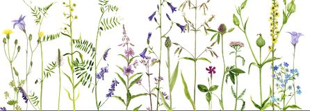 Fond avec des fleurs d'aquarelle Photos stock