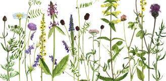 Fond avec des fleurs d'aquarelle Photo libre de droits