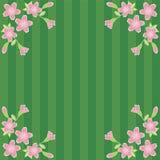 Fond avec des fleurs de cerise Image libre de droits
