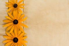 Fond avec des fleurs sur le vieux papier photos libres de droits