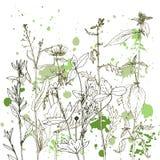 Fond avec des herbes et des fleurs de dessin Photographie stock libre de droits