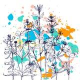 Fond avec des herbes et des fleurs de dessin Images stock
