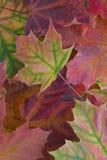 Fond avec des lames d'automne Photo libre de droits