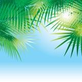 Fond avec des lames des palmiers Image libre de droits