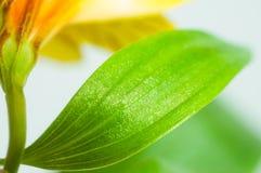 Fond avec des pétales et des feuilles de fleur Images stock