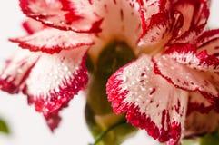 Fond avec des pétales et des feuilles de fleur Images libres de droits