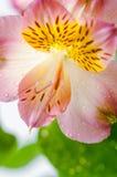 Fond avec des pétales et des feuilles de fleur Photos stock