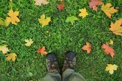 Fond avec des pieds dans des chaussures sur les feuilles jaunes Photographie stock libre de droits