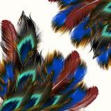 Fond avec des plumes dans le style réaliste Photo stock