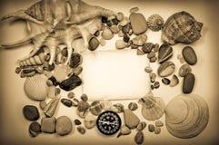 Fond avec des seashells photographie stock libre de droits