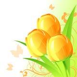 Fond avec des tulipes Photos stock