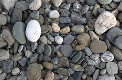 Fond avec différentes pierres de mer de couleur Images libres de droits