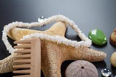 Fond avec différentes coquilles et étoiles cinq-aiguës de mer Photo stock