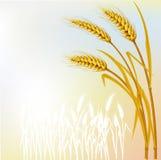 Fond avec du blé Photos libres de droits