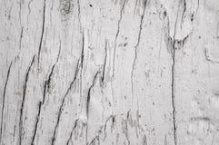 Fond avec l'arbre divisé par texture de noeuds Photos libres de droits