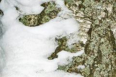 Fond avec l'?corce et la neige de bouleau photo libre de droits