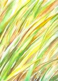 Fond avec l'herbe Photo libre de droits